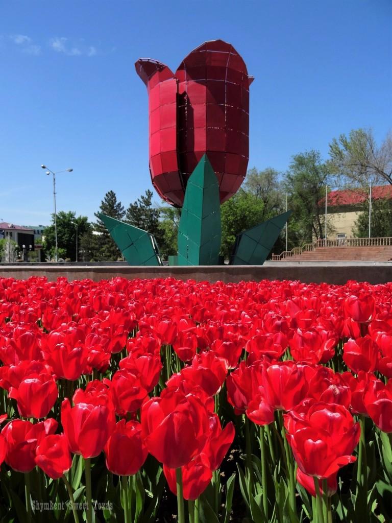 La tulipe dans les tulipes