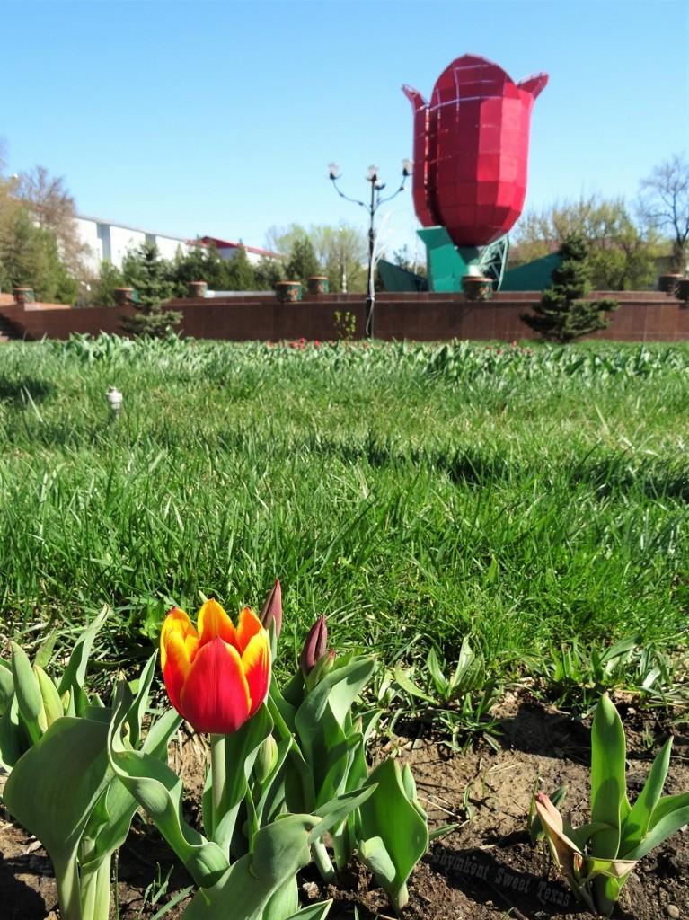 Tulipe jaune devant fontaine tulipe
