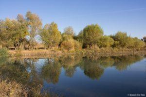 Arys River