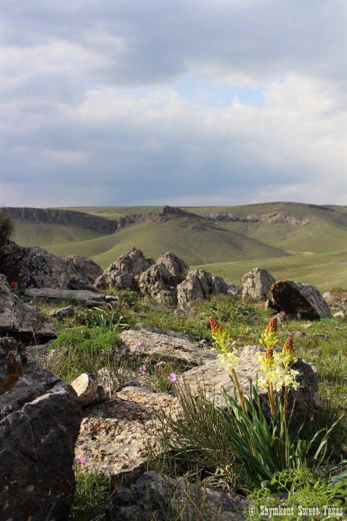 L'attribut alt de cette image est vide, son nom de fichier est Entrée-parc-naturel-Karatau_Sud-Kazakhstan-682x1024.jpg.