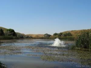 The ponds of Komeshbulak